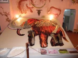Подиум Кранокамский маммонт - палеонтологическая коллекция музея